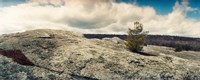 "Tree growing in a boulder, Gertrude's Nose, Minnewaska State Park, Catskill Mountains, New York State, USA by Panoramic Images - 30"" x 12"" - $34.99"