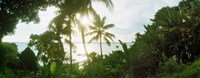 """Palm trees in the forest at coast, Morro De Sao Paulo, Tinhare, Cairu, Bahia, Brazil by Panoramic Images - 31"""" x 12"""" - $34.99"""