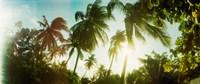 "Sunlight shining through the palm trees, Morro De Sao Paulo, Tinhare, Cairu, Bahia, Brazil by Panoramic Images - 29"" x 12"""
