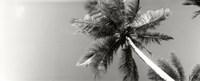Low angle view of palm trees, Morro De Sao Paulo, Tinhare, Cairu, Bahia, Brazil Fine Art Print
