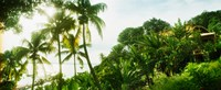 """Palm trees covering a small bungalow in Morro De Sao Paulo, Tinhare, Cairu, Bahia, Brazil by Panoramic Images - 29"""" x 12"""""""