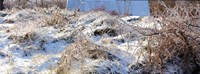 """Snow covered hill, Saint-Blaise-sur-Richelieu, Quebec, Canada by Panoramic Images - 32"""" x 12"""""""
