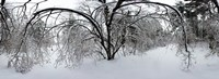 """Forest in winter, Saint-Jean-sur-Richelieu, Quebec, Canada by Panoramic Images - 33"""" x 12"""""""