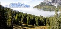 "Morning mist over trees in a forest, Lake Misurina, Dolomites, Belluno, Veneto, Italy by Panoramic Images - 25"" x 12"""