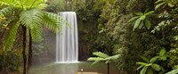 """Waterfall in a forest, Millaa Millaa Falls, Atherton Tableland, Queensland, Australia by Panoramic Images - 29"""" x 12"""""""
