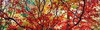 Sunlight Through Autumn leaves, Gloucestershire, England Fine Art Print