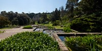 """Trees and aquatic plants in the garden, Mossen Cinto Verdaguer Gardens, Barcelona, Catalonia, Spain by Panoramic Images - 24"""" x 12"""" - $34.99"""