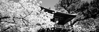 Golden Gate Park, Japanese Tea Garden (black & white) Fine Art Print