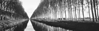 Belgium, tree lined waterway through countryside (black and white) by Panoramic Images - various sizes