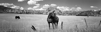 Horses Grazing at Kolob Reservoir, Utah (black & white) Fine Art Print