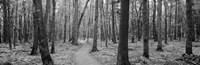 USA, Michigan, Black River National Forest, Walkway running through a forest by Panoramic Images - various sizes