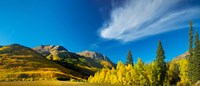 Aspen trees on a mountain, Mt Hayden, Uncompahgre National Forest, Colorado, USA by Panoramic Images - various sizes