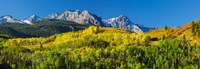 Aspen trees with mountains in the background, Uncompahgre National Forest, Colorado Fine Art Print