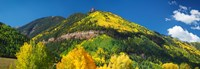 Aspen trees on mountain, Needle Rock, Gold Hill, Uncompahgre National Forest, Telluride, Colorado, USA Fine Art Print