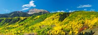 Aspen trees with mountain in the background, Sunshine Peak, Uncompahgre National Forest, near Telluride, Colorado, USA by Panoramic Images - various sizes - $34.99