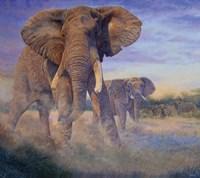 Hold Em and Fold Em - elephants Fine Art Print