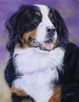 Bernese Mountain Dog Fine Art Print