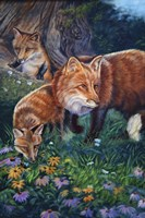 Fox Den Fine Art Print