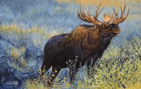 Yellowstone Moose by Cory Carlson - various sizes, FulcrumGallery.com brand