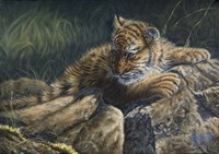 Young Tiger by Cory Carlson - various sizes