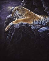 """6"""" x 8"""" Tiger Pictures"""