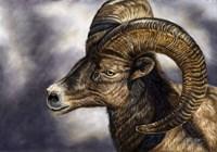 Desert Bighorn Sheep Fine Art Print