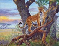 Evening Watch by Cory Carlson - various sizes