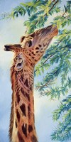 Giraffe by Cory Carlson - various sizes