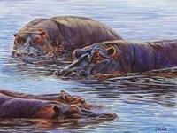 Hippo Pond Fine Art Print