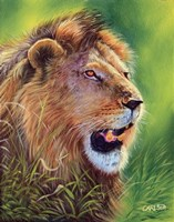 Lion by Cory Carlson - various sizes
