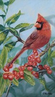 Cardinal And Berries Fine Art Print