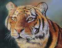 Siberian Tiger by Cory Carlson - various sizes