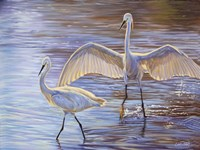Light Dance (Snowy Egrets) by Cory Carlson - various sizes