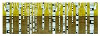 Birches in Fall Fine Art Print