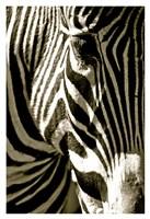 Zebra Head Fine Art Print
