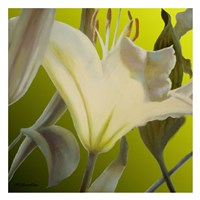 "Lily Green by Jan McLaughlin - 26"" x 26"""