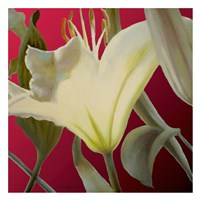 "Lily Red by Jan McLaughlin - 26"" x 26"""
