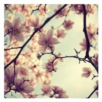 Pink Blossoms Fine Art Print