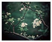 """The Midnight Garden I by Irene Suchocki - 32"""" x 26"""""""
