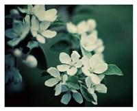 """The Midnight Garden II by Irene Suchocki - 32"""" x 26"""""""