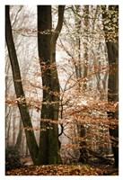 Bronze Tree Fine Art Print