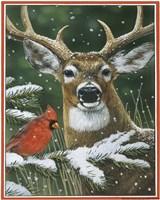 Deer With Cardinal Fine Art Print