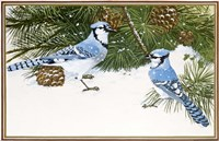 Bluejays Fine Art Print