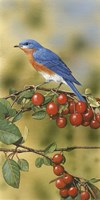 Bluebird by William Vanderdasson - various sizes