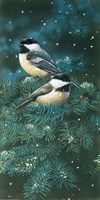 Chickadees by William Vanderdasson - various sizes