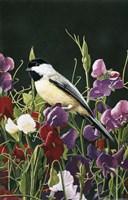 Sweet Peas And Chickadee Fine Art Print