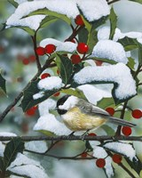 Chickadees And Holly Branch Fine Art Print