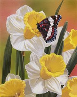 Daffodils & Butterfly Framed Print