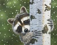 Peek-A-Boo Raccoon Fine Art Print