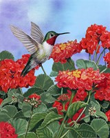 Hummingbird And Flower 2 by William Vanderdasson - various sizes